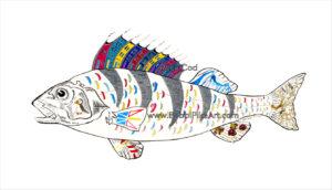 Rock Cod by Bobbi Pike